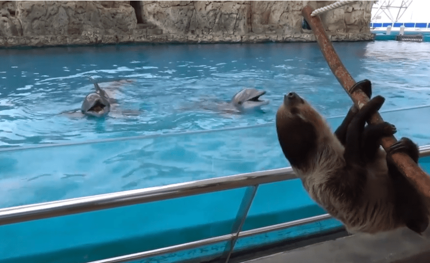 Land and seas animals at the Texas State Aquarium keep each other entertained